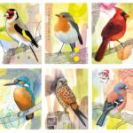 Postkartenserie, 10 von 24 Vogelmotiven