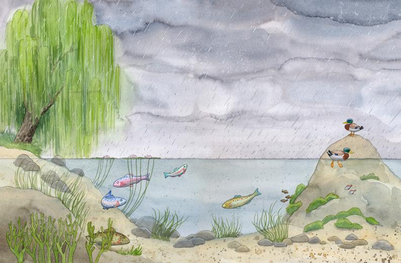 """""""Die Forelle"""", Musikalisches Bilderbuch mit CD, Annette Betz"""